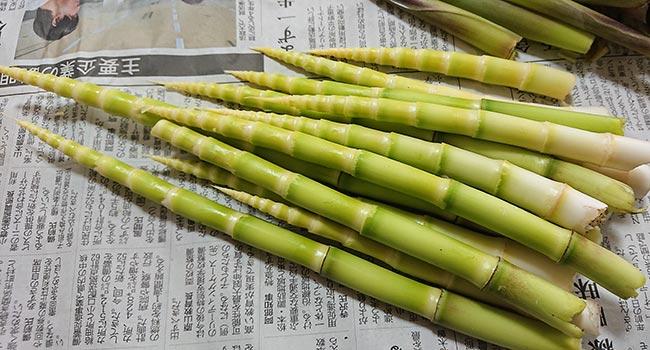 根曲がり竹の皮を剥く